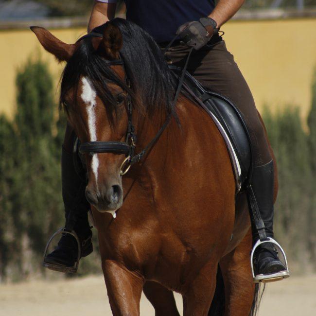 fotografía caballos sax 3