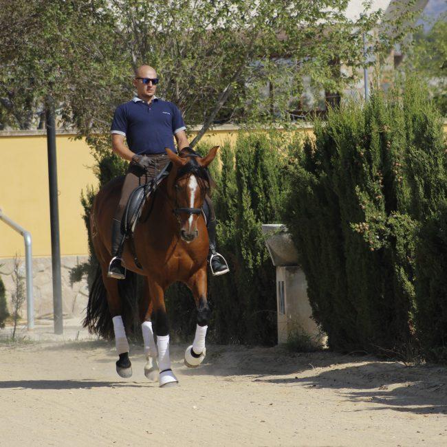 fotografía caballos sax 2
