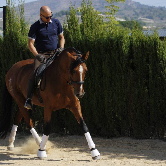 fotografía caballos sax