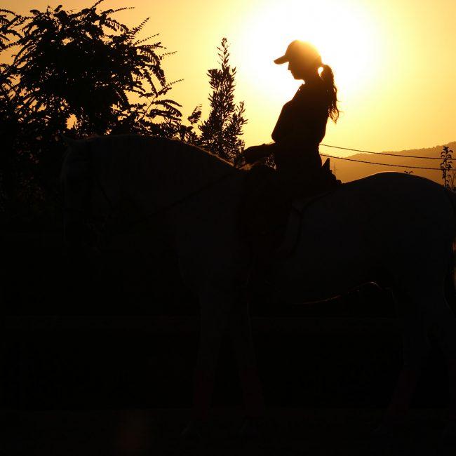 fotografía caballos castalla