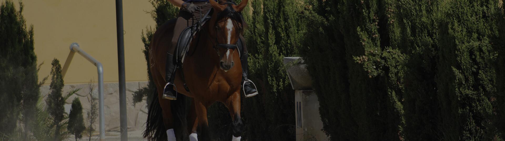 fotografía caballos sax 5